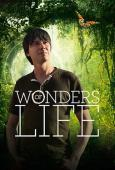 Subtitrare Wonders of Life - Sezonul 1