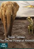 Subtitrare Super Senses: The Secret Power of Animals