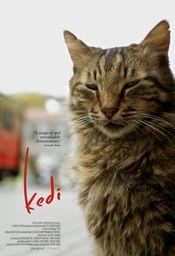 Subtitrare Kedi