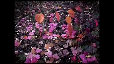 Trailer Untitled George Harrison Documentary