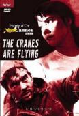 Subtitrare The Cranes Are Flying (Letyat zhuravli)