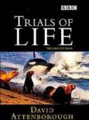 Subtitrare The Trials of Life