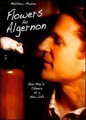 Subtitrare Flowers for Algernon