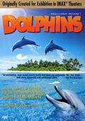 Subtitrare Dolphins