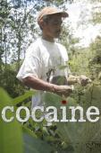 Subtitrare Cocaine - Sezonul 1
