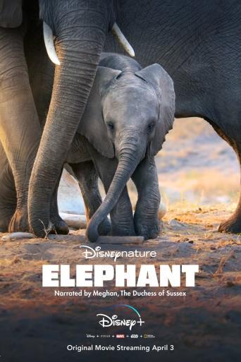 Subtitrare Elephant