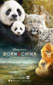 Subtitrare Born in China