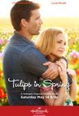 Trailer Tulips for Rose