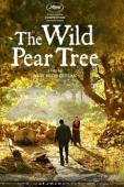 Subtitrare The Wild Pear Tree (Ahlat Agaci)