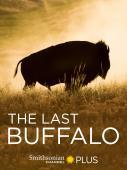 Subtitrare The Last Buffalo