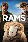 Film Rams